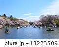 東京 井の頭公園の桜 13223509