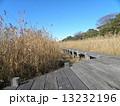 谷津干潟公園の観察用木道 13232196