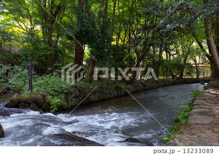 上賀茂神社 - 御手洗川の写真素...