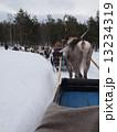 フィンランドのトナカイ 13234319