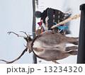 フィンランドのトナカイ 13234320