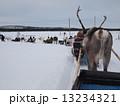 フィンランドのトナカイ 13234321