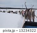 フィンランドのトナカイ 13234322