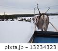 フィンランドのトナカイ 13234323