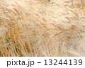 麦実る 13244139
