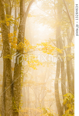 fall yellow 13284634