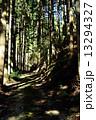 林道 山道 木の写真 13294327