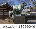 石切神社 牛 銅像の写真 13299040