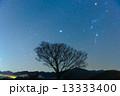 流星群と一本の木 13333400