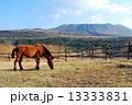 伊豆大島 三原山 馬の写真 13333831