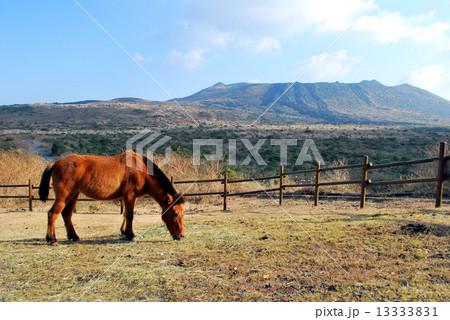 伊豆大島三原山と馬 13333831
