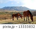伊豆大島三原山と馬2頭 13333832