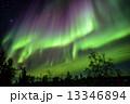 イエローナイフ 光のカーテン オーロラの写真 13346894