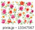バラ 水彩 花のイラスト 13347567