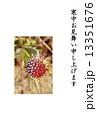 寒中お見舞いテンプレート・朝霜に縁どられたセンニチコウの花・縦書き黒文字「寒中お見舞い申し上げます」コメントなし縦位置 13351676