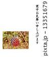 寒中お見舞いテンプレート・朝霜に縁どられたセンニチコウの花・縦書き黒文字「寒中お見舞い申し上げます」コメントなし縦位置 13351679