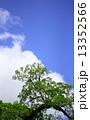 青空 若葉 木の写真 13352566