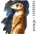 meerkat15106pix7 13392831