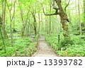 小道 森 森林の写真 13393782