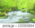 新緑の奥入瀬渓流 阿修羅の流れ 13393804