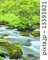 初夏の奥入瀬渓流 三乱の流れ 13393821