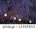 夜のしだれ桜と提灯 13395654