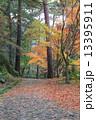 秋の 散歩道 13395911