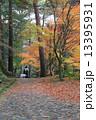 秋の 散歩道 13395931