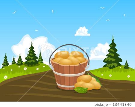 Wood bucket full of harvested potatoes 13441340