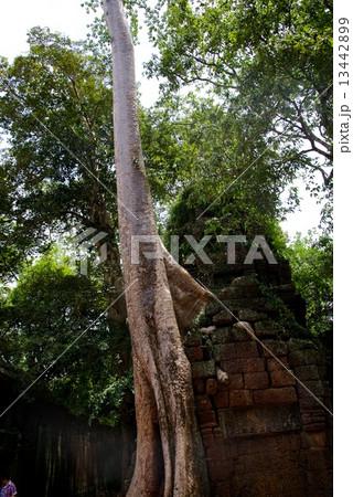 カンボジア アンコールワット タ・プローム 13442899