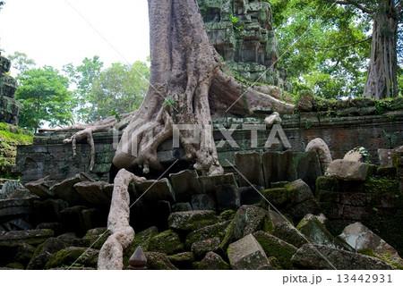 カンボジア ナーガ アンコールワット タ・プローム 13442931