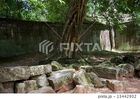 カンボジア アンコールワット タ・プローム 13442932