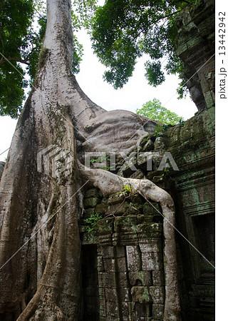 カンボジア アンコールワット タ・プローム 13442942