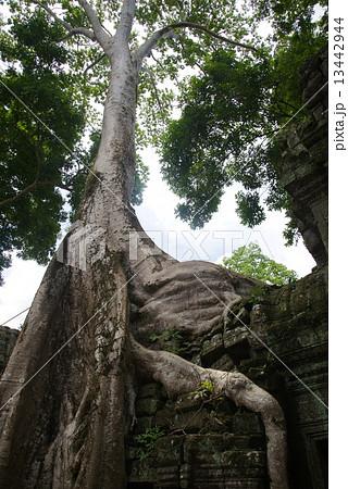 カンボジア アンコールワット タ・プローム 13442944