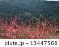 梅咲く山村2 13447568