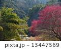 梅咲く山村3 13447569