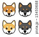 柴犬 犬 顔のイラスト 13450688