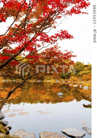 庭園と紅葉と 13453090