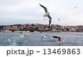 カモメ飛翔 13469863