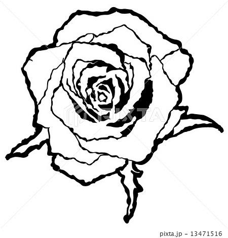 バラb 白黒のイラスト素材 13471516 Pixta