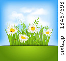 Spring nature background with camomiles, ladybugs, grass, blue s 13487693