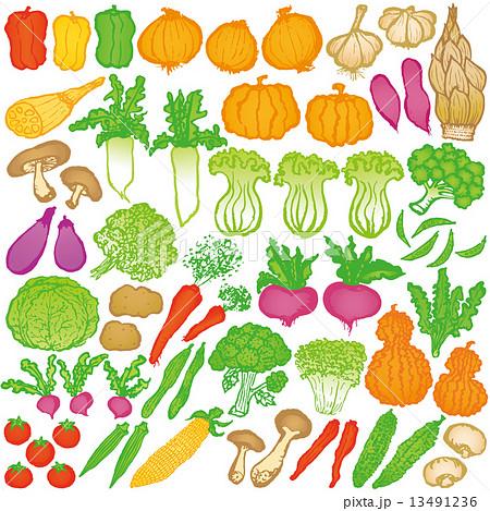 野菜 マルシェ イラストのイラスト素材 13491236 Pixta