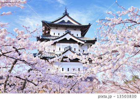 弘前城の桜 13503830