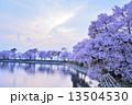 夕暮れ時の桜 13504530