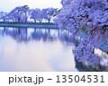 夕暮れ時の桜 13504531