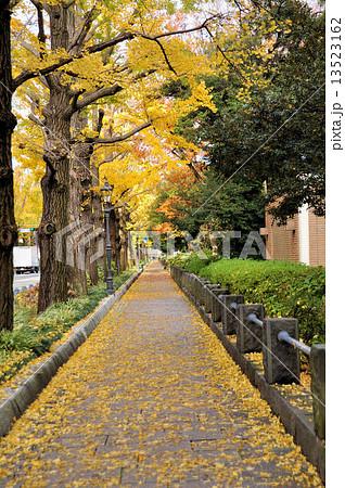 秋の山下公園通りの写真素材 [13...