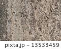 エノキ(榎) 13533459