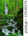 青森 新緑の奥入瀬渓流 雲井の滝 13546574