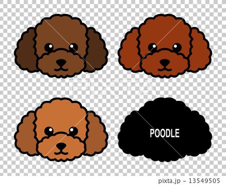 贵宾犬2 13549505