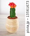 さぼてん サボテン 仙人掌の写真 13561673